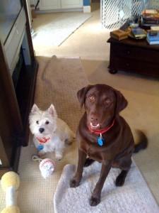 Barney and Martin 1